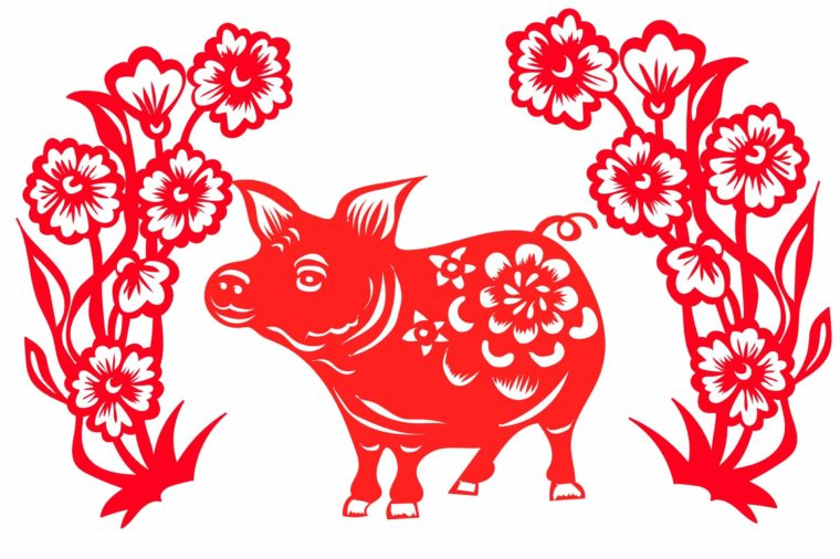 astrologie-chinoise-cochon