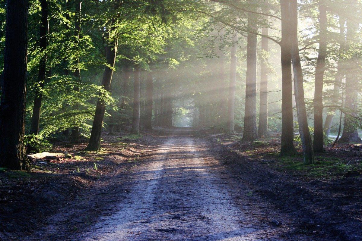 meditation-pleine-conscience-promenade