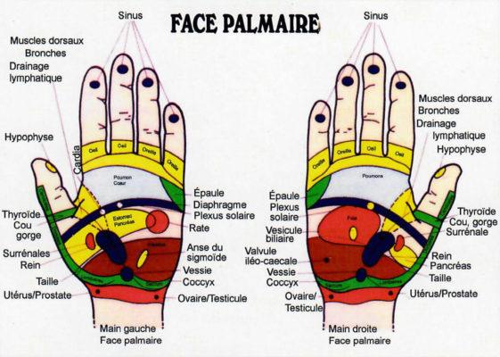 reflexologie-mains-cartographie
