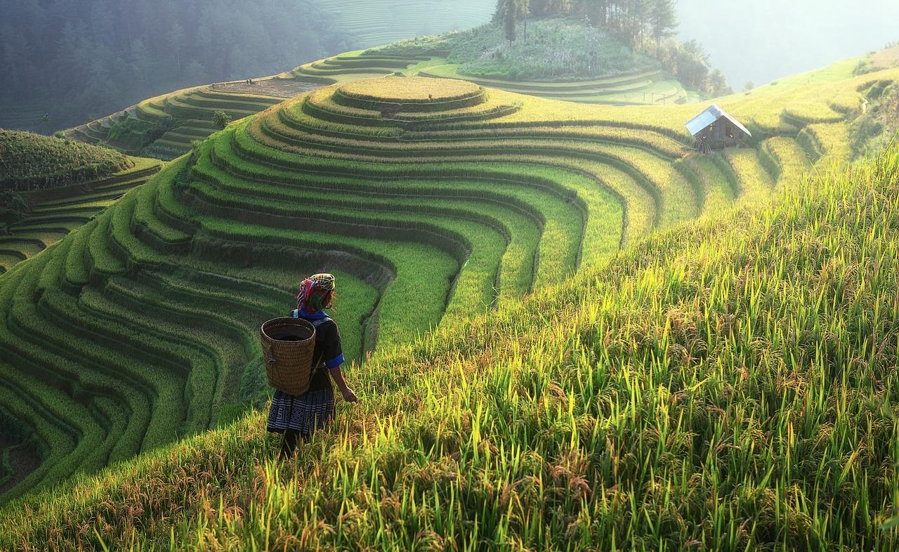 rizière-chinoise-harmonise-cosmos