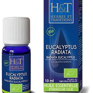 huiles-essentielles-eucalyptus