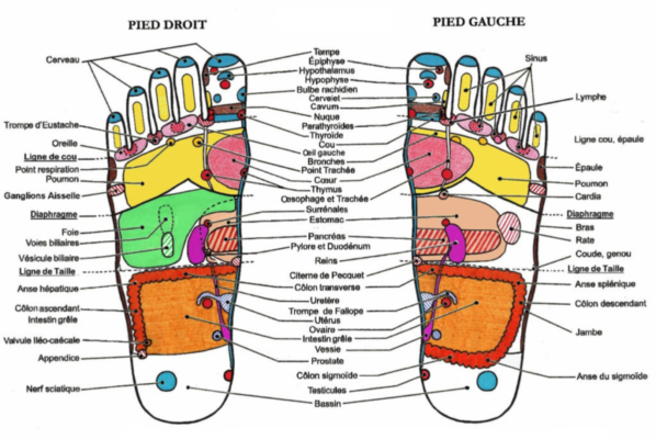 cartographie-reflexologie-plantaire