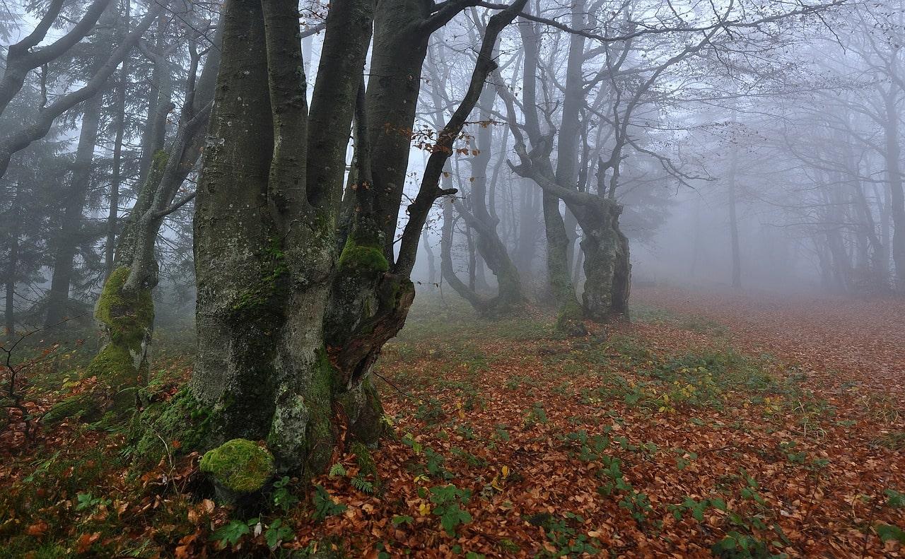 forêt-champignon-chinois