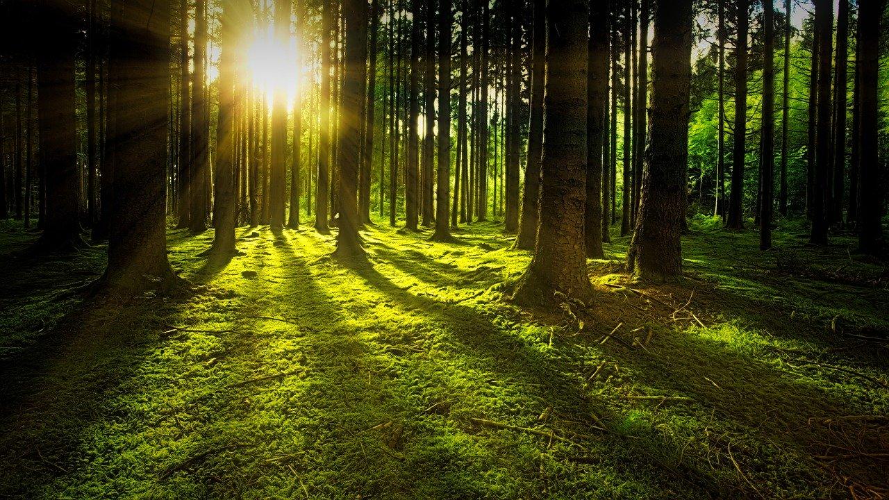 nature-paysage-foret-lumière