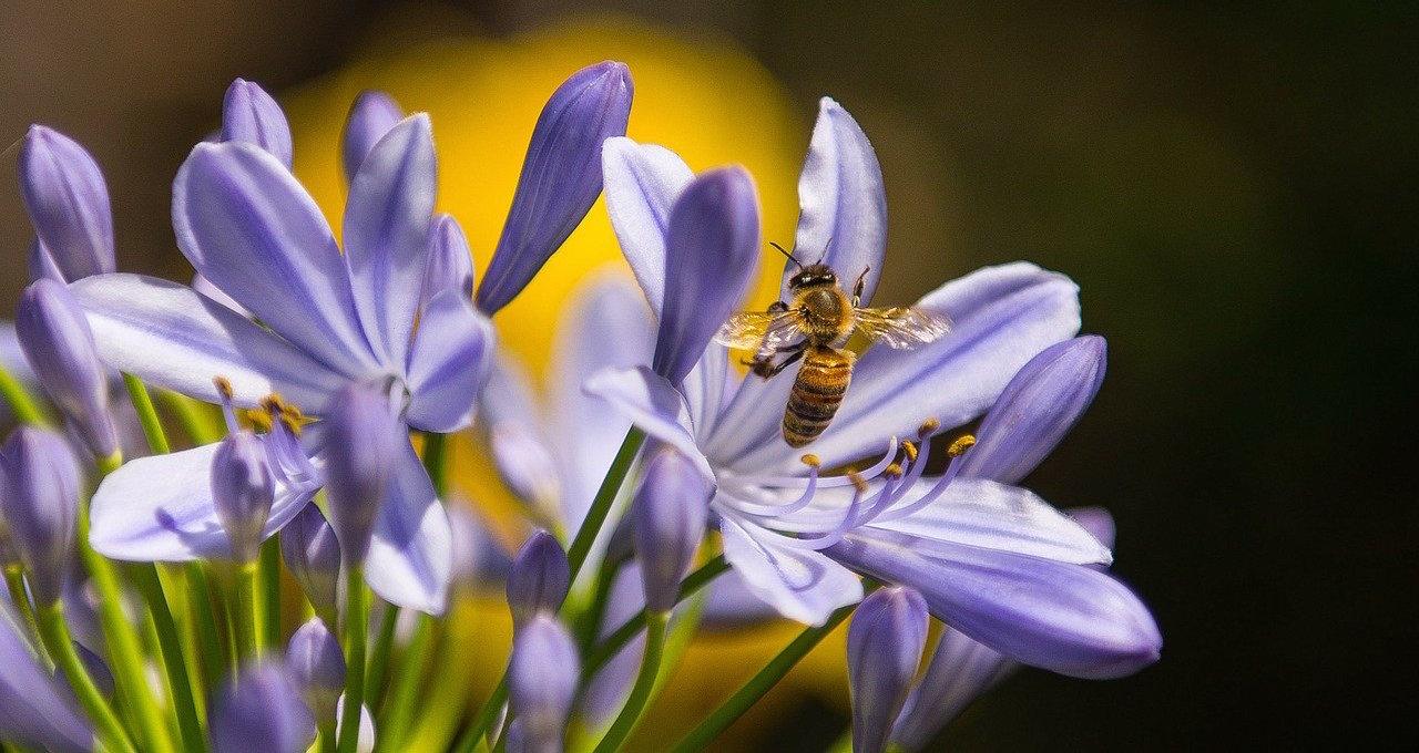 abeilles-fleurs-apitherapie-medecine-chinoise