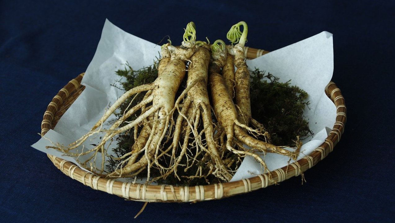 ginseng-chinois-plante-medecine-chinoise