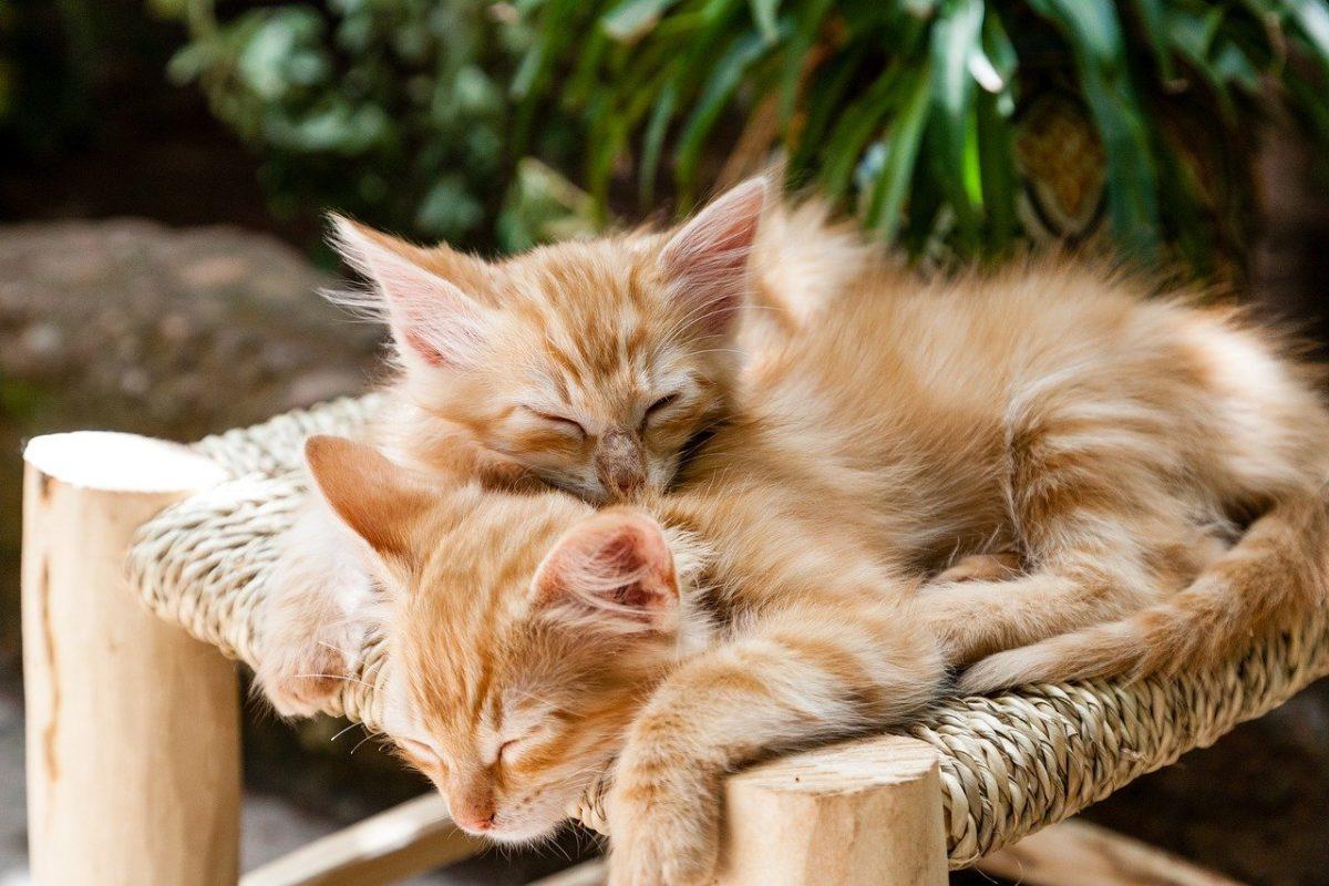 chat-sieste-sommeil-bien-etre