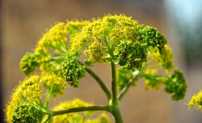 plante-pour-perdre-du-poids
